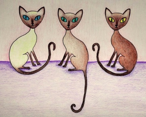 Tonkinese cat club.